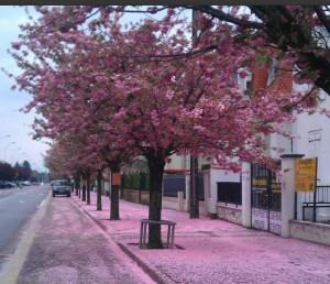 rosablüten