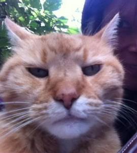Grumpy Kasimir