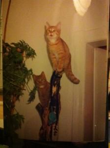 Prinz Kasimir als junger Mann (oben; hier mit seiner Schwester Prinzessin im Bild) zeigt, wie man in der Balance bleibt