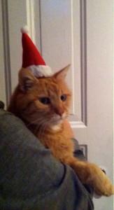 Bedenken Sie, dass die Weihnachtsfeier im hoheitlichen Rahmen stattfindet und posten Sie keine indiskreten Fotos wie dieses hier: Unser Anstandskater Prinz Kasmir auf der roaylen Xmas-Party - Foto: Prinzessin Marit